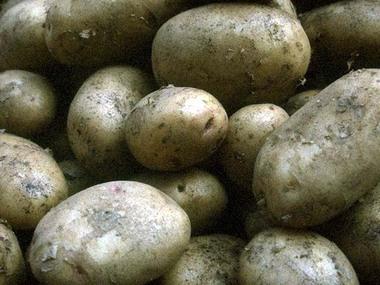 Pommes_de_terre