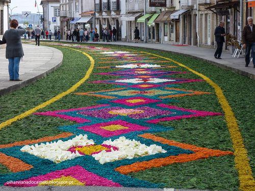 Tapetes de flores, Caminha (3)