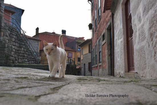 Helder 6